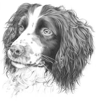 Eastern Counties Spaniel Society